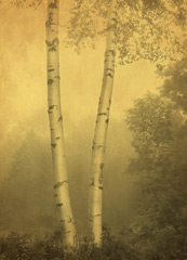 Two Birches