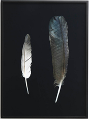 Wunderkammer Series- Feathers