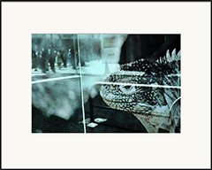 City of Blue Iguana, from the series Le Rouge et le Noir